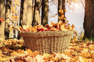 This image has an empty alt attribute; its file name is fall-4180846_960_720-300x200.jpg