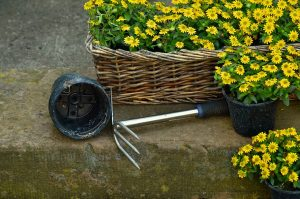 This image has an empty alt attribute; its file name is garden-gardening-plant-flowers-hoe-300x199.jpg