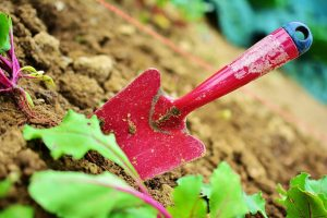 This image has an empty alt attribute; its file name is gardening-garden-blade-plant-300x200.jpg