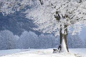 This image has an empty alt attribute; its file name is winter-4680354_960_720-300x200.jpg
